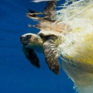 Symphony y la tecnología de los envases y productos biodegradables d2w ™ está presente en un amplio reportaje del The Times sobre la guerra contra el plástico.
